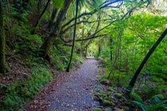 Weg door dicht gematigd regenwoud met varenbomen in zuideneiland, in Nieuw Zeeland stock afbeeldingen