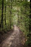 Weg door een bos Stock Foto