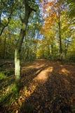 Weg door een bos in de herfst royalty-vrije stock foto
