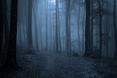 Weg door een bos met zwarte bomen en mist Royalty-vrije Stock Foto