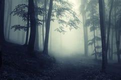 Weg door een donker bos royalty-vrije stock afbeelding