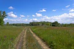 Weg door een gebied met dik gras stock afbeeldingen