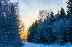 Weg door een winters bos bij zonsondergang in Estland royalty-vrije stock foto's