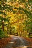 Weg door gevallen bladeren in bos wordt behandeld dat stock afbeelding
