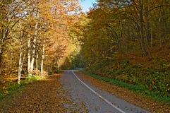 Weg door het beukbos in de herfst Royalty-vrije Stock Afbeeldingen