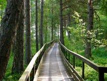 Weg door het bos royalty-vrije stock afbeelding