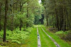 Weg door het bos stock afbeelding