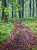 Weg door het bos Royalty-vrije Stock Foto