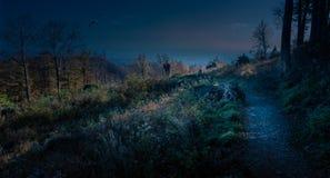 Weg door het bos in de bergen Stock Fotografie