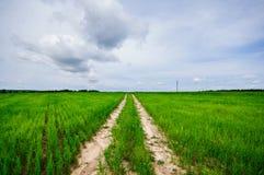 Weg door het grasrijke gebied Stock Afbeeldingen