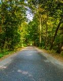 Weg door het groene bos Royalty-vrije Stock Foto's