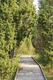 Weg door het hout Stock Foto