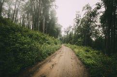 Weg door het hout in de zomer stock foto