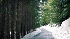 Weg door het Hout met Sneeuw het Vallen stock videobeelden
