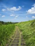 De weg ubud Bali Indonesië van het land Stock Fotografie