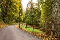 Weg door het mooie de herfstbos dichtbij Brienz, Berner-Hooglanden, Zwitserland Stock Foto
