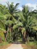 Weg door het palmbosje Stock Afbeeldingen