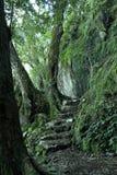 Weg door het regenwoud Stock Foto's