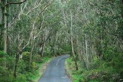Weg door het regenwoud Stock Afbeelding