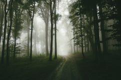 Weg door het verrukte nevelige hout royalty-vrije stock foto's