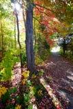 Weg door hout in de herfst Royalty-vrije Stock Foto's