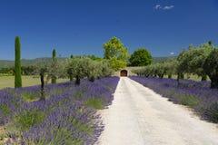 Weg door lavendel Royalty-vrije Stock Foto