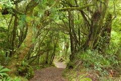 Weg door regenwoud royalty-vrije stock afbeelding