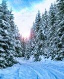 Weg door sneeuw behandelde pijnboom stock foto