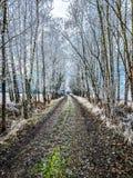 Weg door steeg tussen sneeuw behandelde bomen, het landschap van het de winterplatteland Royalty-vrije Stock Foto