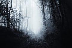 Weg door surreal achtervolgd griezelig bos stock foto