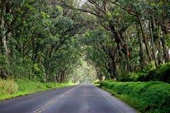 Weg door tunnel van bomen royalty-vrije stock afbeelding