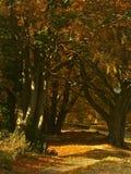 Weg durch Bäume Stockbild