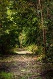 Weg durch Bäume lizenzfreies stockfoto