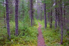 Weg durch Bäume im Wald Stockfotos