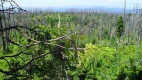 Weg durch bayerischen Wald mit Tausenden der toten Bäume stockfotos