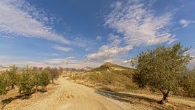 Weg durch Berge Sierre Nevada mit Olivenbäumen auf der Seite Stockfotografie