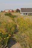 Weg durch das Dünen-Gras Stockbilder