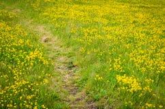 Weg durch das gelbe Feld Stockbilder