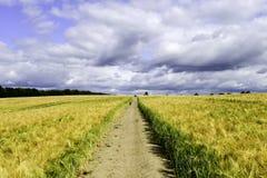 Weg durch das gelbe Weizenfeld Lizenzfreie Stockbilder