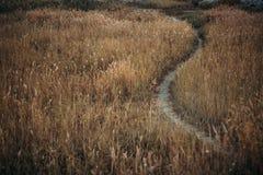 Weg durch das Herbstfeld mit gelb gefärbtem Gras stockbild