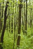 Weg durch das Holz lizenzfreie stockbilder