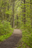 Weg durch das Holz lizenzfreie stockfotos