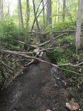 Weg durch das Holz Stockfotografie