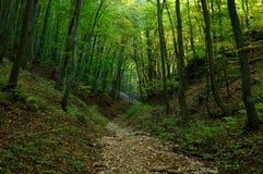 Weg durch den grünen Wald Stockfotos