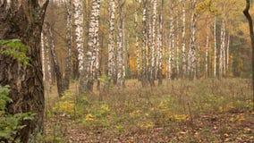 Weg durch den Herbstpark stock footage