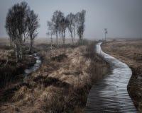 Weg durch den Nebel in der Tallandschaft lizenzfreies stockbild