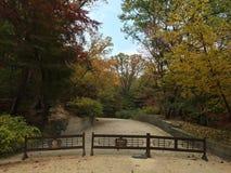 Weg durch den Park im Fall Lizenzfreie Stockfotografie