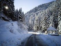 Weg durch den Tannenwald stockbilder