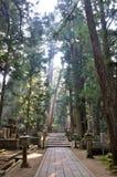 Weg durch den Wald Lizenzfreies Stockfoto