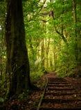 Weg durch den Wald in die Sonne lizenzfreies stockfoto